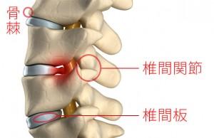 頸椎椎間関節